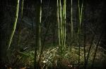 Creek Grass