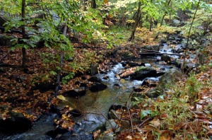 Fall Stream2