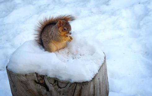 nutsone