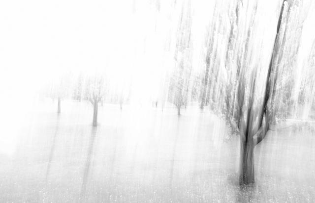 treeblur