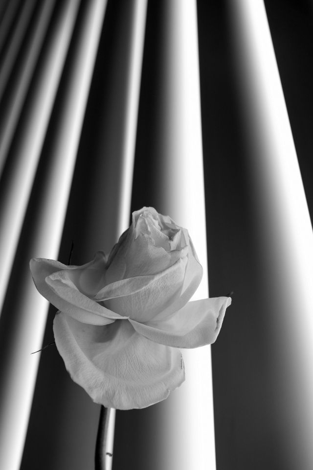 flowershade